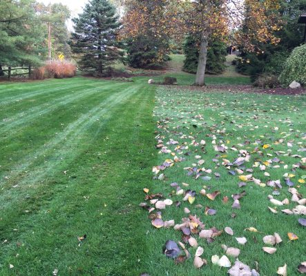 Leave removal and lawn care services